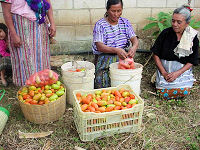 Guatemalan Women with their micro-credit funded vegetable business
